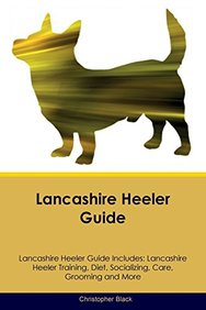 Lancashire Heeler Guide Lancashire Heeler Guide Includes: Lancashire Heeler Training, Diet, Socializing, Care, Grooming, Breeding and More