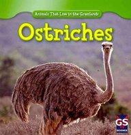 Ostriches (Animals That Live In The Grasslands)